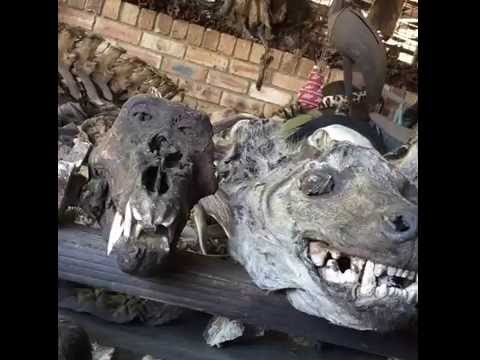 Joburg muthi market unchecked in its trade of illegal wildlife products
