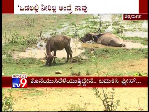 History of ''Timmannanayakanakere'' of Chitradurga, A Lake on Verge of Extinction