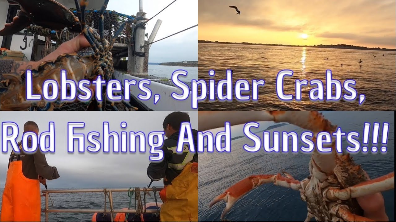 Rod Fishing For Pollock, Mackerel, LobstersAnd Spider Crabs - 24hr Soak!!!
