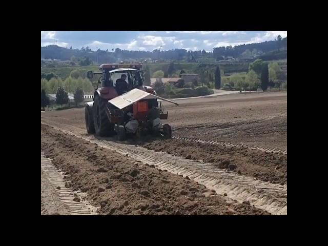 Plantação de vinha 2020 Portugal