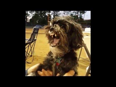 Singing Dog