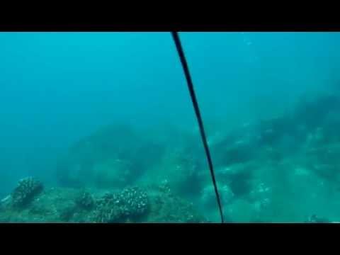 Ahukini sibling dive sesh