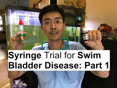 Syringe Surgery Trial For Goldfish Swim Bladder Disease: Procedure [PART 1]👉