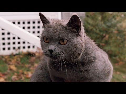 《禁入墳場 1989》這部號稱斯蒂芬·金最恐怖小說改編的電影,寵物竟然只是個幌子!(寵物墳場)