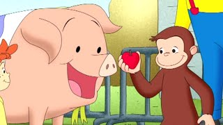 Curious George 🐵Curious George, Hog trainer 🐵 Kids Cartoon 🐵 Kids Movies 🐵Videos for Kids