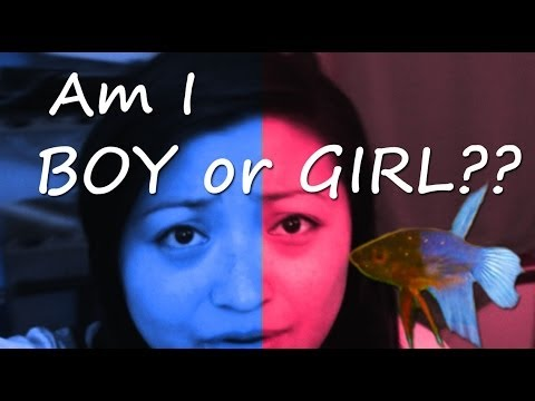 Am i boy or girl baby betta fish update youtube for Baby fish song
