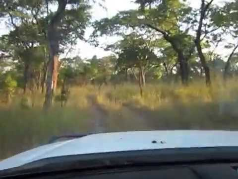 Driving in Kafue National Park (1) - Zambia