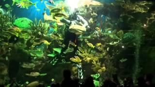 Шоу с акулами. Океанариум в Санкт-Петербурге