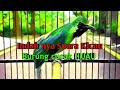 Merdu Suara Kicau Burung Cucak Ijo Bikin Suasana Serasa Di Alam Pegunungan Melodious Bird Sound  Mp3 - Mp4 Download