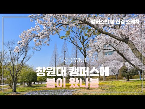 창원대 캠퍼스에 봄이 왔나봄(미디어센터 제작)