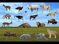 African Animals Names And Sounds All Animals Learn Wild Animals For Kids Wildlife  Mp3 - Mp4 Download