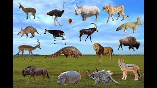 African Animals Names And sounds (All  Animals) | Learn Wild Animals For Kids | Wildlife