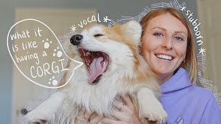 WHAT IT'S LIKE HAVING A CORGI // 4 things to know