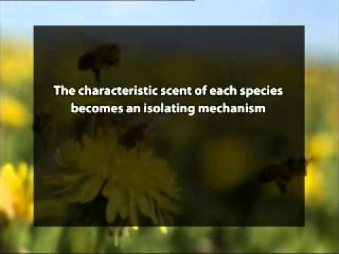 Pollinator Attraction and Rewards For Them