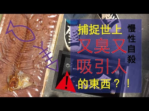 Bana- (灌模・吃乾淨的魚骨)DIY|Embedding a fishbone in polyester resin