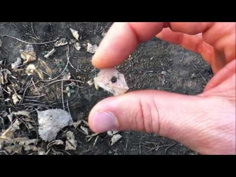 Small Hole Drilled In Flint:  Arrowhead Hunting - Will County, Illinois 9/23/2014