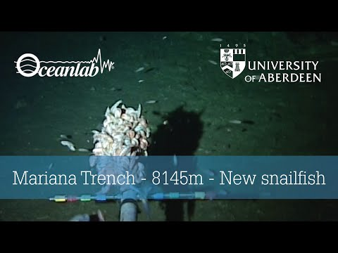 Watch: World's Deepest Fish Lurks 5 Miles Down in Mariana Trench