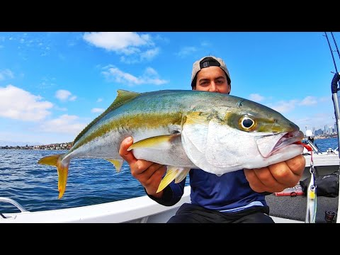 Top Water Kingfish On Poppers VS Light Tackle - Yellowtail Kingfish Lures Only - Fishing Australia