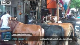 بالفيديو| رغم التحذيرات.. ذبح الأضاحي بشوارع السيدة زينب