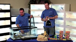 Bearded Dragon Husbandry, Proper Caging and Lighting- Carolina Classic Dragons