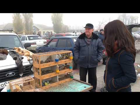Выставка - Ярмарка голубей в Поворино