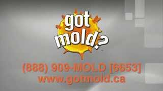 Got Mold Disaster Recovery Services