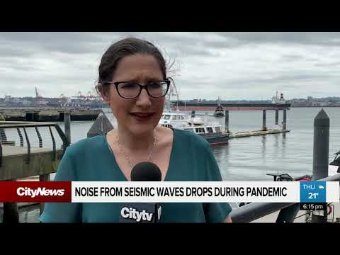 noise-from-seismic-waves-drops-during-covid-19-pandemic