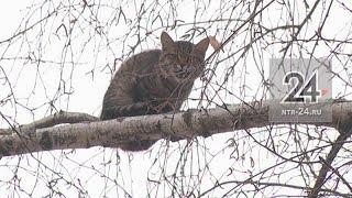 В Нижнекамске неравнодушный водитель подъемника помог спасти застрявшего на дереве кота