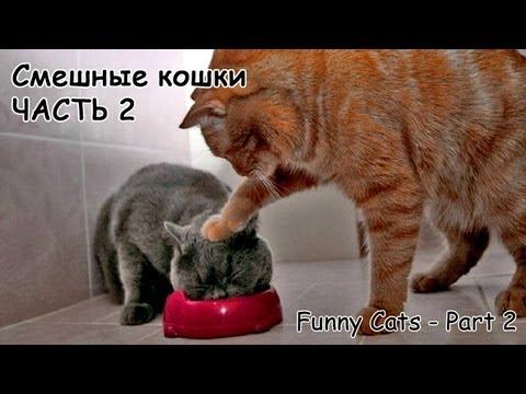 Смешные кошки - смотреть видео