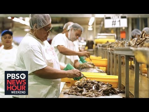 Sea Of Obstacles Imperil American Samoa's Tuna Industry