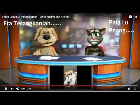Video Lucu Eta Terangkanlah - Versi Kucing dan Anjing