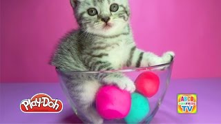 "Play-Doh Surprise Kittens Looking For Toys, Котята Ищут Игрушки в Пластилине, ""プレイドゥ驚きの猫を探し玩具"