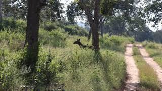 Bandipur National Park an abode of Nilgiri wild animals