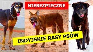 9 niebezpiecznych ras psów, które w Indiach nadal są zwierzętami domowymi