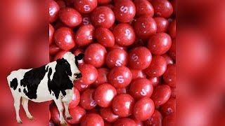 Truckload Of Skittles Intended for Cattle Falls Off Of A Truck | What's Trending Now!