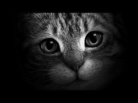 Artistic Black & White [Portrait In Black] Photoshop ...