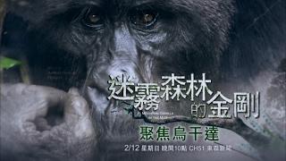 迷霧森林的金剛 - 聚焦烏干達,2月12日星期天晚間10點播出