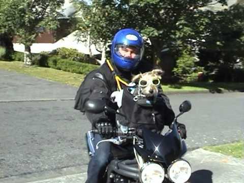 Astrophysics Jack Russell On Motorbike Youtube