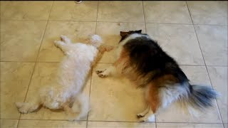 Funny Videos On Dog's Obedience Training. Animals Obey Owner. Dogs Movie.  Funny Pranks.