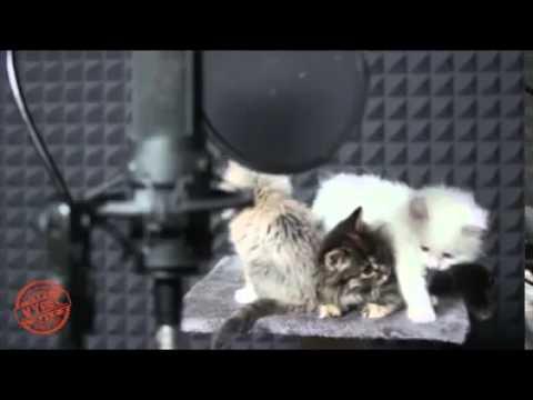 Cute Cat Singing Remix