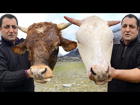 MEGA TASTY RECIPE OF SOUP WITH A COW S HEAD A VERY HEALTHY BEEF DISH