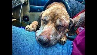 腫瘍で先の長くない犬を乗せ、最期に暮らす家へと向かって行く…