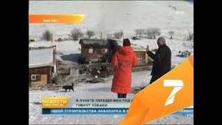 Показываем приют под Красноярском, владельца которого обвинили в массовой гибели собак