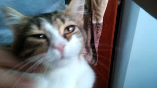 Котёнок, который СИЛЬНО СОСКУЧИЛСЯ)