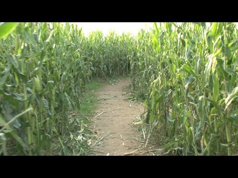 Mother leaves behind toddler in corn maze — overnight