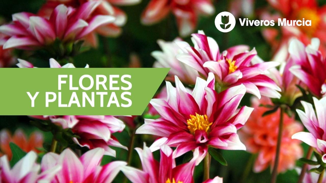 Spot viveros murcia jardiner a flores y plantas 10s - Viveros de murcia ...