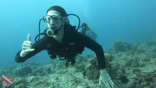 Scuba Diving in Oahu Hawaii - vlog 341