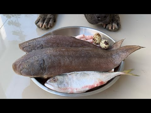 oliang-the-pit-bull-eats-sole-fish-sashimi-combo-[asmr]-raw-diet-|-mukbang-犬が生の肉を食べる-개는-날-음식을-먹는다-4k