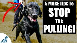 5 MORE Tips To Stop Your Dog From Pulling On The Leash