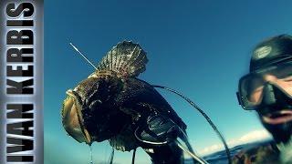 Шесть рыб приморья сибирским взглядом.  Подводная охота на дальневосточных берегах (Без обработки)(Сбылась моя мечта побывать и поохотиться в приморском крае нашей Родины на японском море. Подводная охота..., 2016-09-08T08:35:15.000Z)